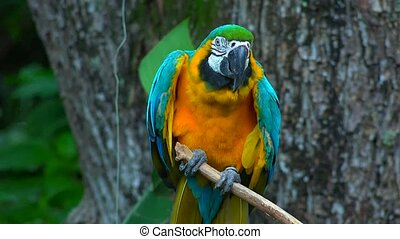 Wild Parrot On Perch
