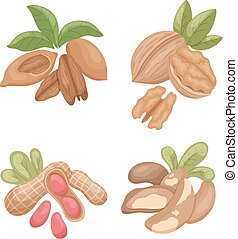 nuts2 - vector set of nuts on isolated background: pecan,...
