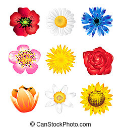 Set of spring flowers - Set of vector spring flowers...