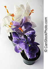 Crocuses - A unique and creative composition of a group of...
