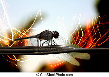 Wireless Communication - A dragonfly (Flying insect) sitting...