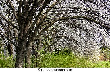 Spring scene - Blooming trees in the park in spring time