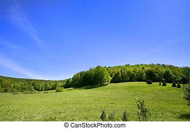 Landscape in spring time
