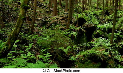 Wild forest in Czech mountains panorama view