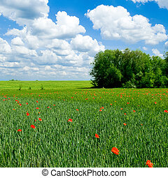 Red poppy on green field - Tranquil rural landscape