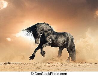 frisian stallion in the wild