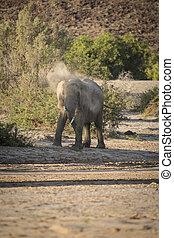 Desert Elephant, Namibia