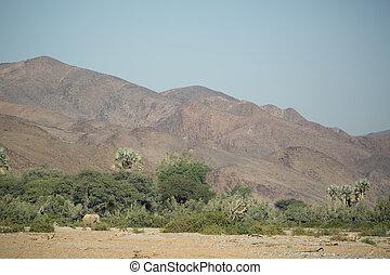 Desert Elephant