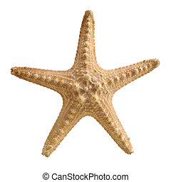 Starfish - Starfish on white background isolated