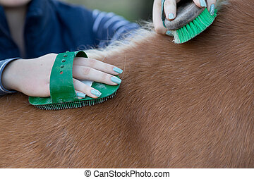 Girl grooming horse - Close up of female hands grooming...