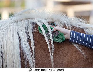 Girl grooming horse - Young girl grooming horse and showing...