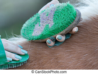 Girl grooming horse - Close up of female hands holding...