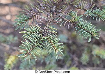 Tree Branch - Tree branch