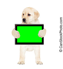puppy and a tablet, a green screen