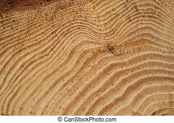 Wood Annual Growth Rings - A detail of pine log showing the...