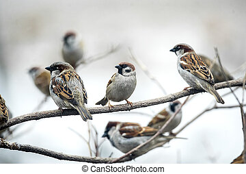 sparrows sitting on branches