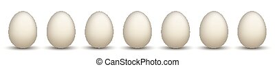 7 Natural Chicken Eggs Header - 7 white chicken eggs on the...