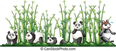 Pandas in the bamboo forest illustration