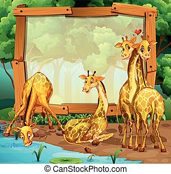 Frame design with giraffes in the jungle illustration