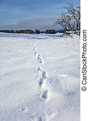 Animal foot prints in snow - Image of animal foot prints in...