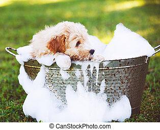 Adorable Cute Golden Retriever Puppy - Adorable Cute Puppy...
