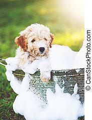 Adorable Cute Golden Retriever Puppy - Adorable Cute Puppy....