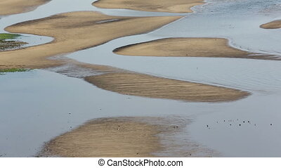 view of low tide on the sea - view of low tide with bird...