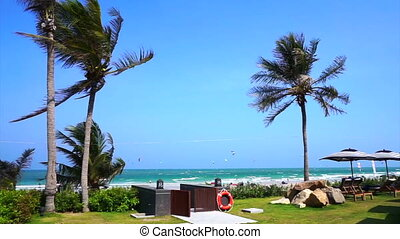 Windy beach coconut palm trees - Windy beach and coconut...