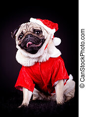 pug dog - portrait of a pug dog in Santa dress
