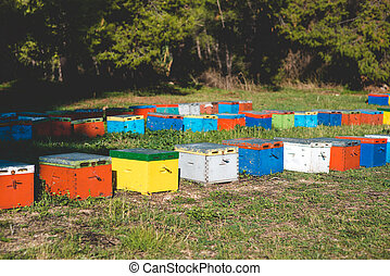 Colorful bee hives - Bee hives on meadow in countryside of...
