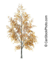 Birch Tree on White - Digital render of a birch tree...