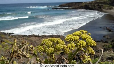 Bright yellow flowers growing on volcanic rocks beside the...