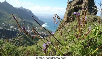 Vegetation in Tenerife - Characteristic vegetation on the...