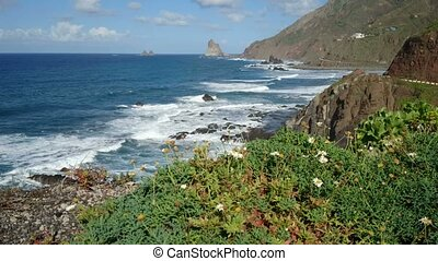 Vegetation on volcanic rocks beside the ocean in northern...