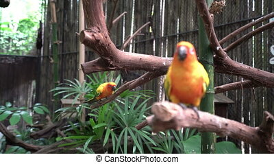 Parrots sitting on branches. - Two yellow parrots sitting on...