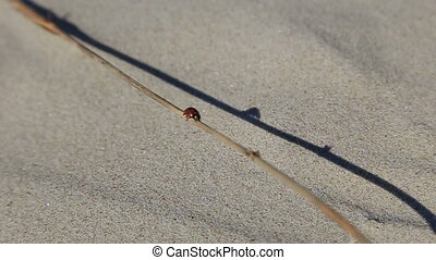 ladybird on a background of sea sand