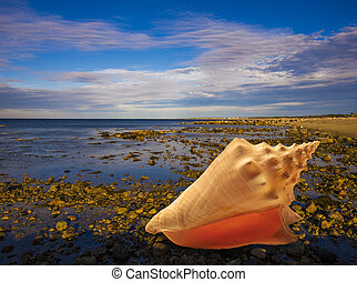 Large conch shell on sandy beach