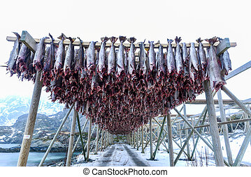 Reine, Lofoten Islands, Norway - Cod hanging to dry in...