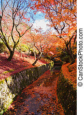 Red maple leaf fall around water canal at Kiyomizu-dera temple