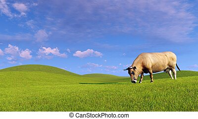 Single dairy cow graze on green hills - Single red dairy cow...