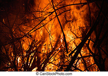 Forest Fire - Huge Fire in the forest or jungle
