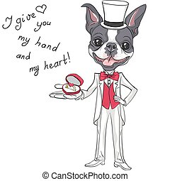 Vector fashion elegant groom dog Boston Terrier - Elegant...