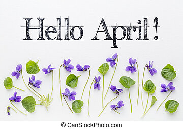 Hello April greetings with viola flowers - Hello April...