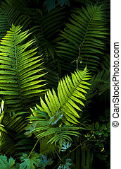 fern leaves on a dark background with grape leaves