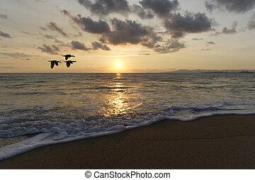 pôr do sol, Pássaros, voando,