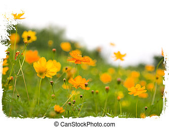 Forest of orange flowers isolated on white
