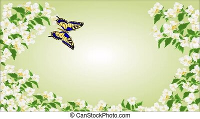 Video seamless loop butterfly Swall - Animation of...