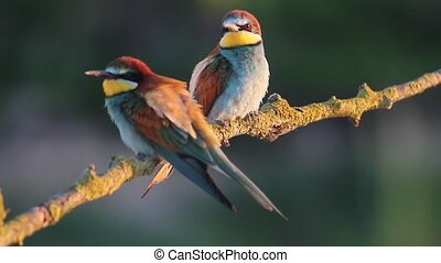 Couple colored bird sitting on a branch