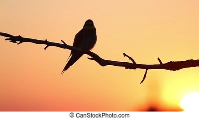 bird silhouette on an orange sky, sunset, bird on a branch