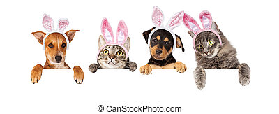 Easter Dogs and Cats Hanging Over White Banner - Row of cats...